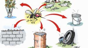 dengue6